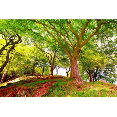 Фотообои Дерево | арт.23408