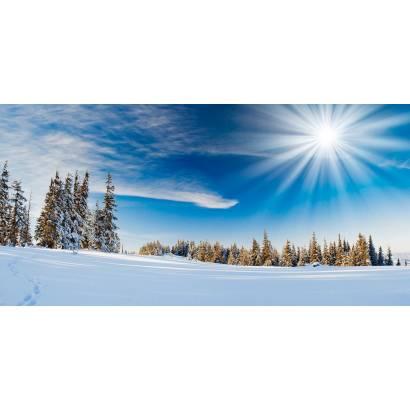 Фотообои Зимний Лес | арт.23424
