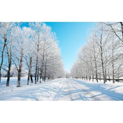 Фотообои Зимняя Дорога | арт.23446