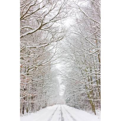 Фотообои Зимняя Дорога | арт.23455