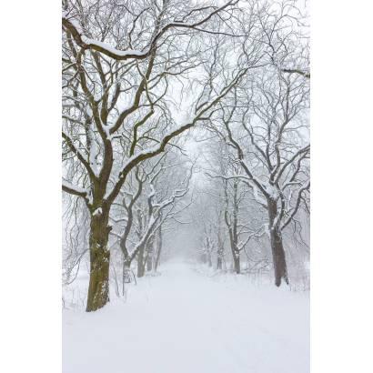 Фотообои Зимняя Дорога | арт.23458