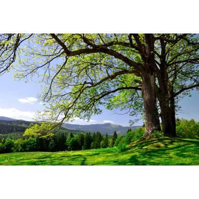 Фотообои Дерево | арт.23468