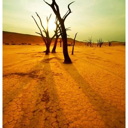 Фотообои Засуха | арт.23469