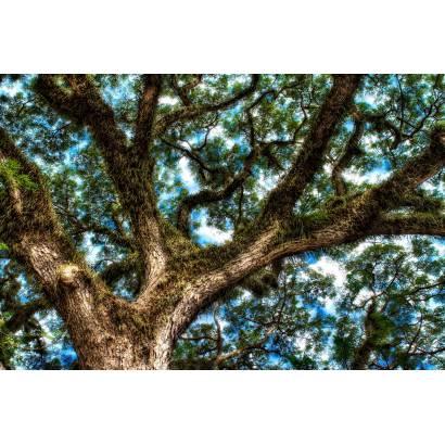Фотообои Дерево | арт.23478