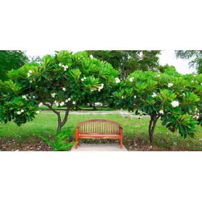 Фотообои Скамейка В Парке | арт.23499