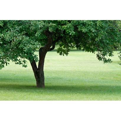 Фотообои Дерево | арт.23502