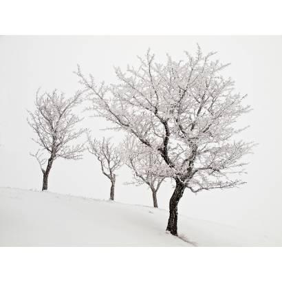 Фотообои Зима | арт.23503