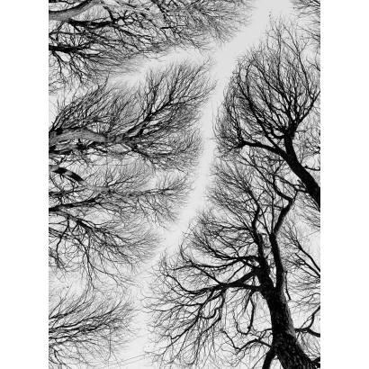 Фотообои Свинцовое Небо | арт.23517