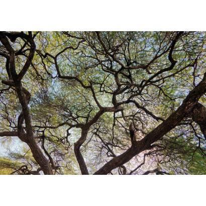 Фотообои Дерево | арт.23521