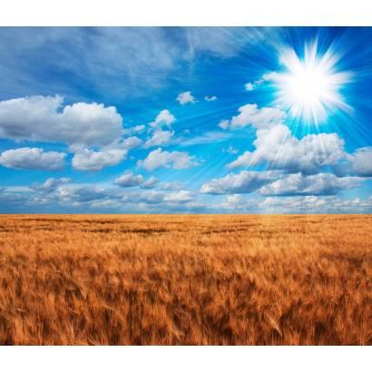 Фотообои Пшеничное Поле | арт.23530