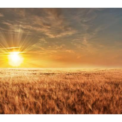 Фотообои Пшеничное Поле | арт.23532