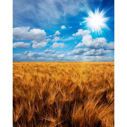 Фотообои Пшеничное Поле | арт.23533