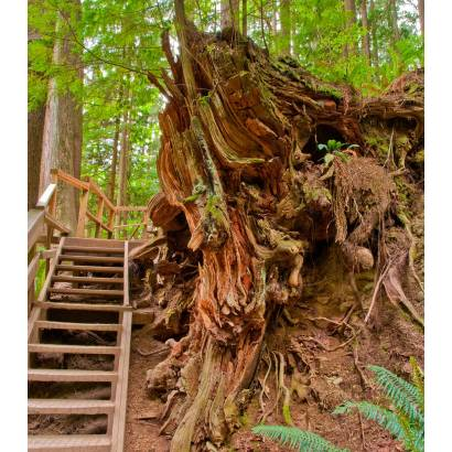 Фотообои Корни дерева | арт.23542