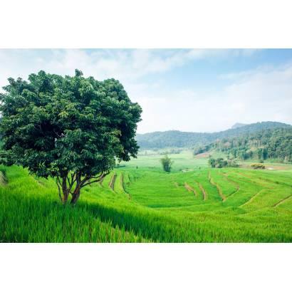 Фотообои Рисовые плантации | арт.23547