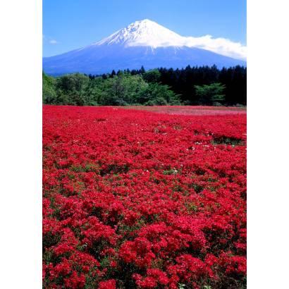 Фотообои Поле красных цветов. Япония | арт.23552