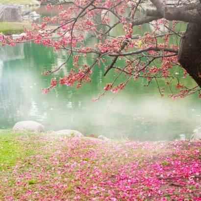 Фотообои Сакура. Япония | арт.23566