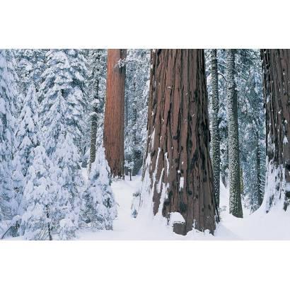 Фотообои Зимний Лес | арт.2357