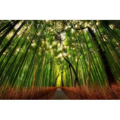 Фотообои Бамбуковый лес | арт.23579