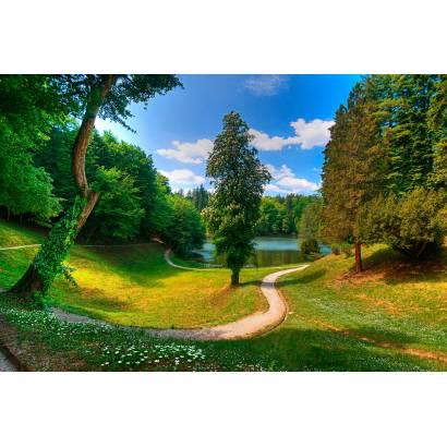 Фотообои Лесная тропинка к озеру | арт.23586