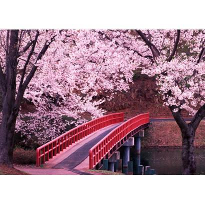 Фотообои Японский сад | арт.23593