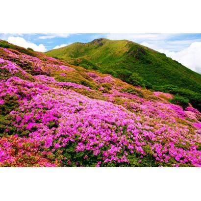 Фотообои Полевые цветы | арт.23607
