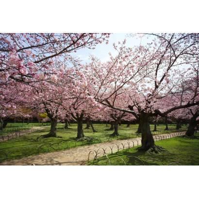 Фотообои Сад цветущей сакуры | арт.23617
