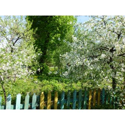 Фотообои Зеленый Сад | арт.23626