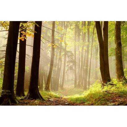 Фотообои Рассвет в лесу | арт.23628