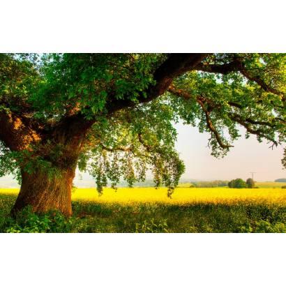 Фотообои Старое Дерево | арт.23629