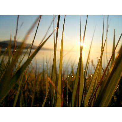 Фотообои Закат в траве | арт.23630
