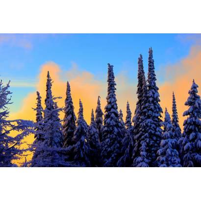 Фотообои Заснеженный лес | арт.23634