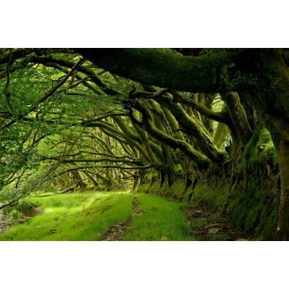 Фотообои Глубины Леса | арт.23637