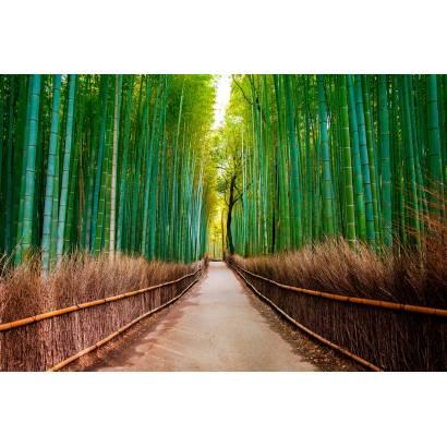 Фотообои Бамбук | арт.23647