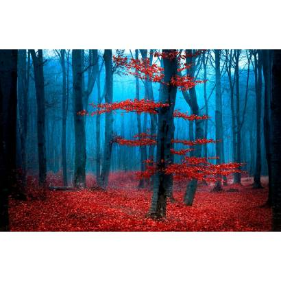 Фотообои Волшебный лес | арт.23651