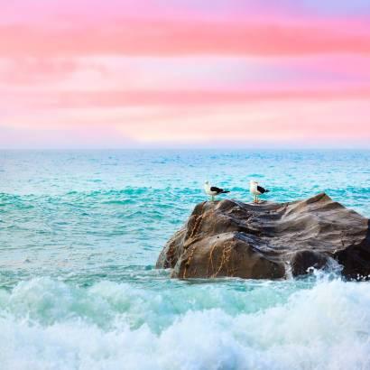 Фотообои Чайки перед рассветом | арт.23653