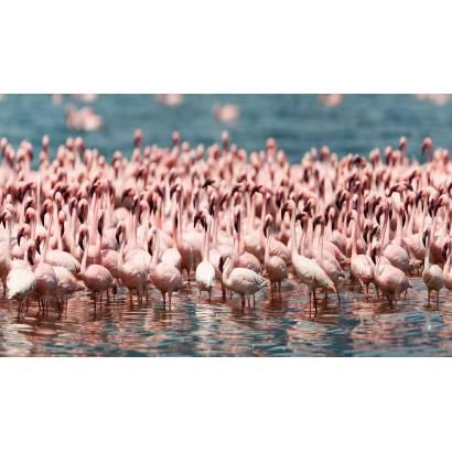 Фотообои Фламинго | арт.23657
