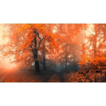 Фотообои Осенний лес в тумане | арт.23659
