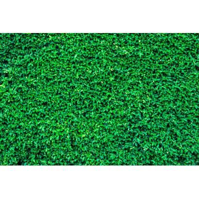 Фотообои Зеленая стена | арт.23662