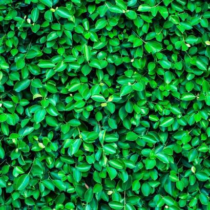 Фотообои Зеленая стена | арт.23663