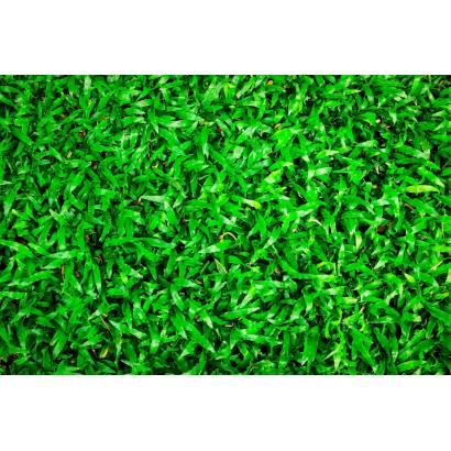 Фотообои Зеленая стена | арт.23664