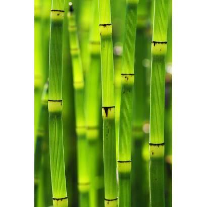 Фотообои Зеленые стебли | арт.23665