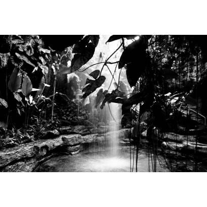 Фотообои Чёрно - белый тропический лес | арт.23669