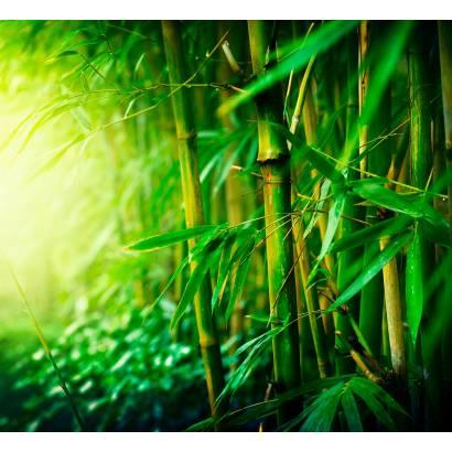 Фотообои Бамбук | арт.23671