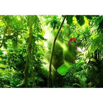 Фотообои Попугаи в тропическом лесу | арт.23672