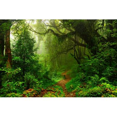 Фотообои Тропический лес | арт.23674