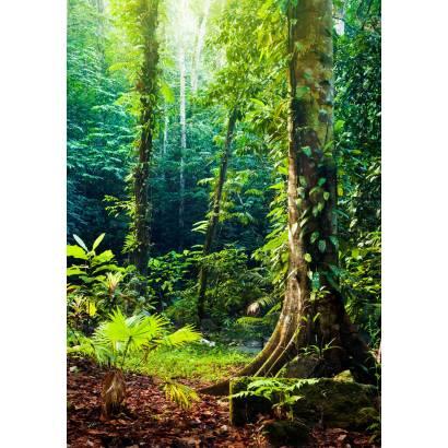 Фотообои В глубине леса | арт.23675