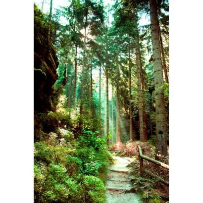 Фотообои Дорожка в лесу | арт.23676
