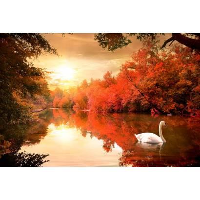 Фотообои Лебедь | арт.23680