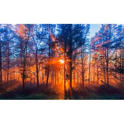 Фотообои Закат в лесу | арт.23686