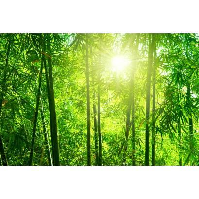 Фотообои Бамбуковый лес | арт.23690